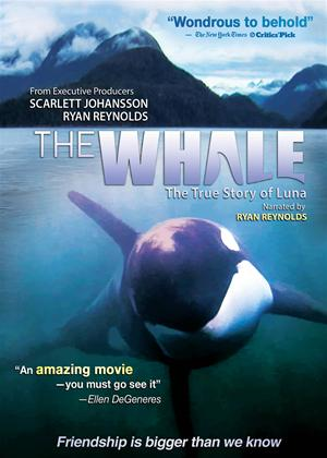Rent The Whale Online DVD Rental