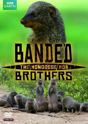 Rent Banded Brothers: The Mongoose Mob Online DVD Rental