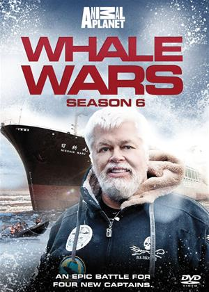 Rent Whale Wars: Series 6 Online DVD Rental