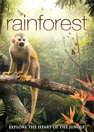 Rent Rainforest (aka Secret Life of the Rainforest) Online DVD Rental