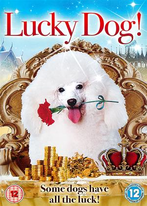 Rent Lucky Dog! (aka Bring Happiness Home) Online DVD Rental