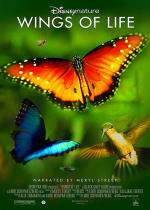 Rent Hidden Beauty (aka Disneynature: Wings of Life / Pollen) Online DVD & Blu-ray Rental