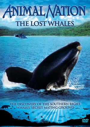 Rent Animal Nation: The Lost Whales Online DVD Rental