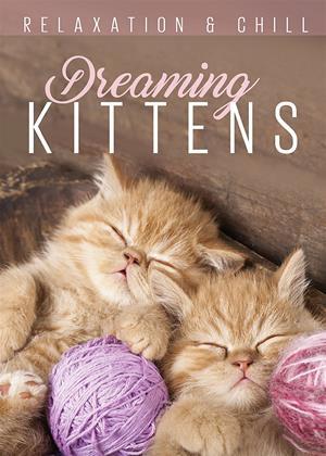 Rent Dreaming Kittens Online DVD & Blu-ray Rental