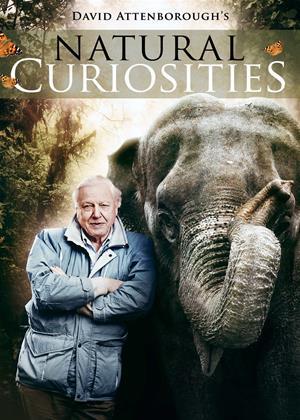 Rent Natural Curiosities (aka David Attenborough: Natural Curiosities) Online DVD & Blu-ray Rental