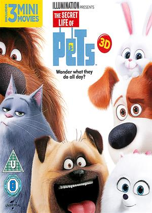 The Secret Life of Pets Online DVD Rental