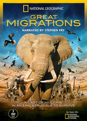 Rent National Geographic: Great Migrations Online DVD Rental