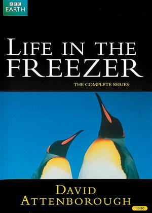 Rent Life in the Freezer (aka David Attenborough: Life in the Freezer) Online DVD Rental