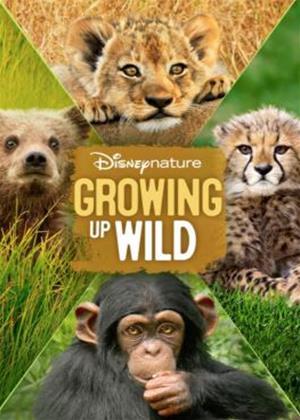 Rent Growing Up Wild Online DVD Rental