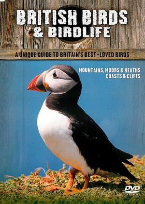 Rent British Birds and Birdlife (aka British Birds: Mountains Moors, Moors and Lakes / Coasts and Cliffs) Online DVD Rental