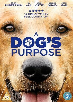 A Dog's Purpose Online DVD Rental