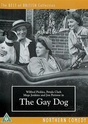 Rent The Gay Dog Online DVD & Blu-ray Rental