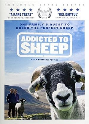 Rent Addicted to Sheep Online DVD Rental