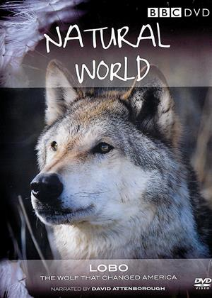 Rent Natural World (aka Natural World: Lobo the Wolf That Changed America) Online DVD & Blu-ray Rental