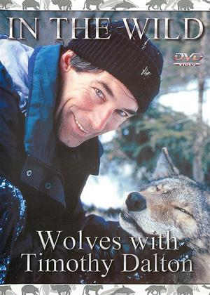 Rent In the Wild: Wolves with Timothy Dalton Online DVD & Blu-ray Rental