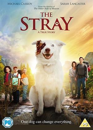 Rent The Stray Online DVD Rental