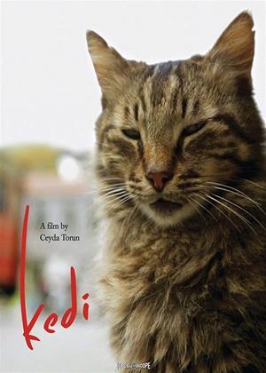 Rent Kedi (aka Nine Lives: Cats in Istanbul) Online DVD & Blu-ray Rental