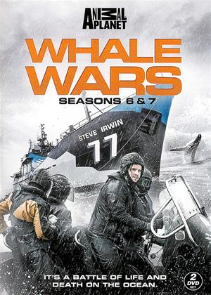 Rent Whale Wars: Series 7 Online DVD & Blu-ray Rental