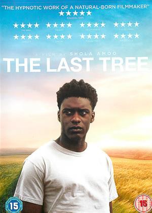 Rent The Last Tree Online DVD & Blu-ray Rental