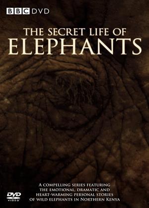 Rent The Secret Life of Elephants Online DVD & Blu-ray Rental