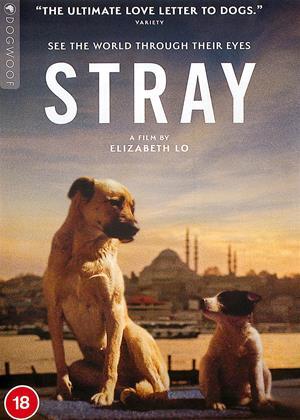 Rent Stray Online DVD & Blu-ray Rental