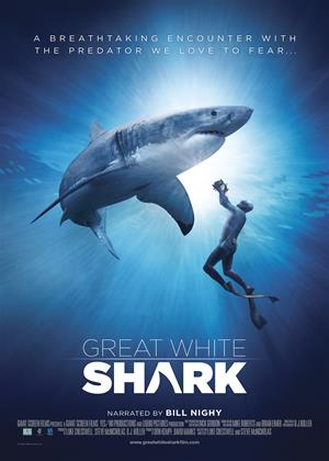 Rent Great White Shark Online DVD & Blu-ray Rental