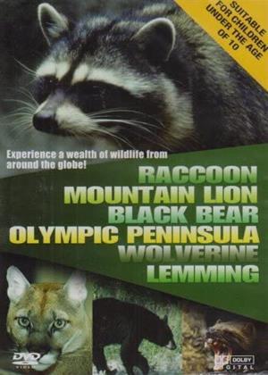 Rent Wildlife: Racoon / Mountain Lion / Black Bear Online DVD & Blu-ray Rental