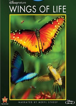 Rent Wings of Life (aka Disneynature: Wings of Life / Pollen) Online DVD & Blu-ray Rental